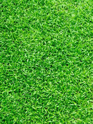 EXPOflor - Green Statement The Mill Internation Pte Ltd